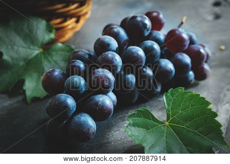 Fresh Concord grapes still life selective focus
