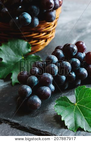 Fresh Concord grapes still life selective focus