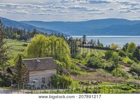 Homestead Cabin and Orchard Okanagan Lake Kelowna British Columbia Canada on a summer day