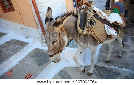 Donkey taxi in the Mediterranean islands. New adventurous mean of transportation.