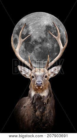 Deer With Moon On Dark Background