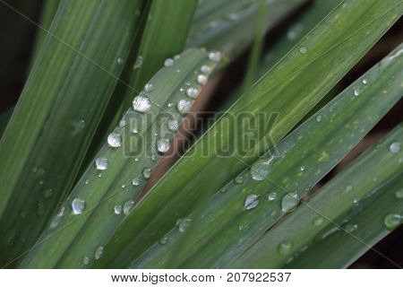 water drops on the green grass- close up