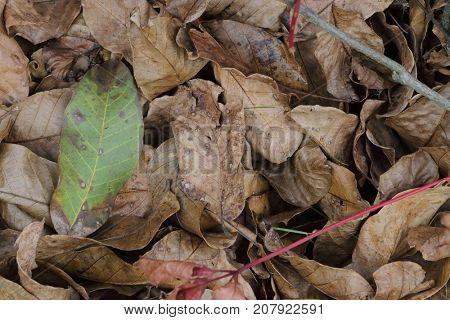 brown autumn foliage on ground - background