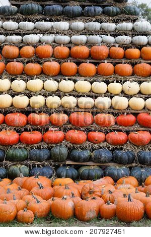Autumn Harvested Pumpkins Background