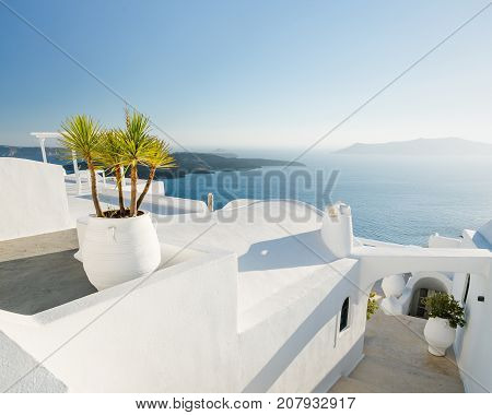 White walls and pot plants along a walkway in Santorini, Greece.
