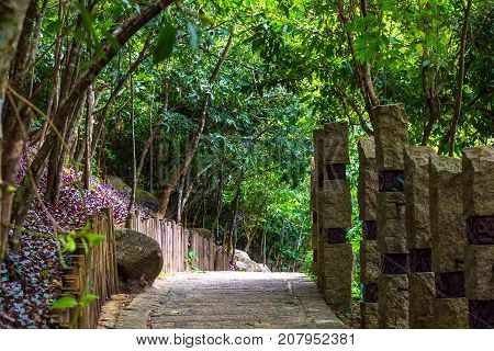 Concrete path, laid in the forest. Yalong Bay Tropic Paradise Forest Park, Hainan, China. The jungle is the most interesting thing that there is on the Sanya island for the traveler.