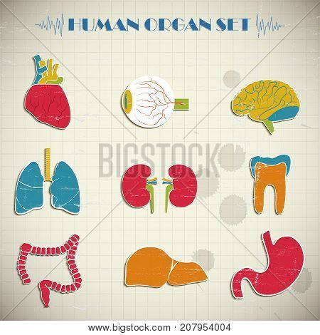 Colorful human internal organs set isolated on squared notebook paper background flat vector illustration