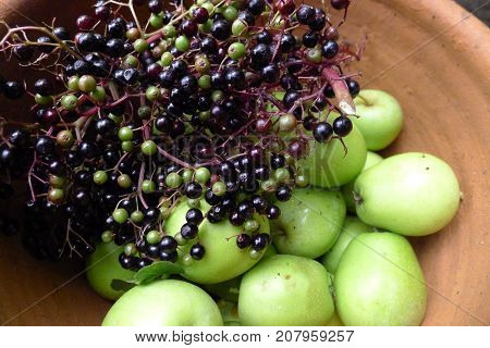 Elderberry and pear to make a delicious healthy juice