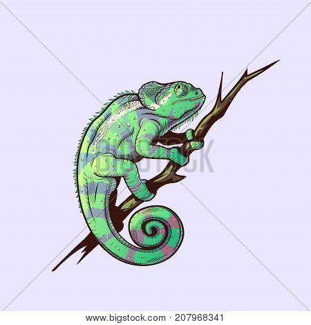 Green chameleon on a branch colored illustration
