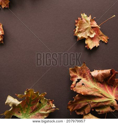 Foliage Maple Leaves On A Brown Background. Top View. Square Image.