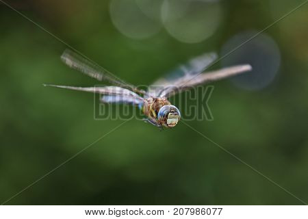 Dragonfly macro in flight shot