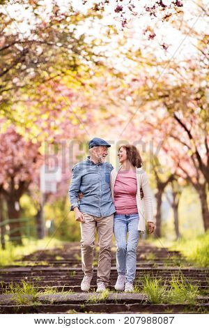 Beautiful senior couple in love on a walk outside in spring nature under blossoming trees.