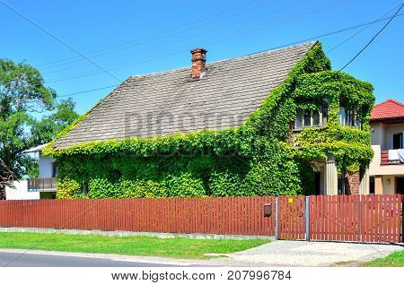 Creatively decorated old house. Old house in green leaf.