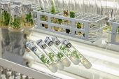 Five test tubes with microplants in nutrient medium on the glass table. Micropropagation technology in vitro poster