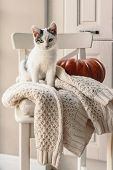 Cute kitten relaxing on warm sweater on a chair. Lazy cat resting on soft pullover. November weekend concept scene. poster