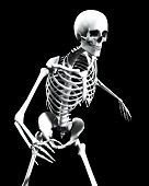 An x ray image of a Skelton in a pose a suitable image for medical or Halloween based concepts. poster