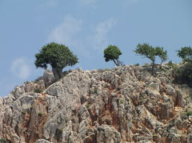 Trees on the rock