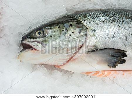 Fresh Salmon Fish On A Ice Un Market