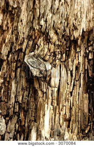 Knot In Rotted Wood