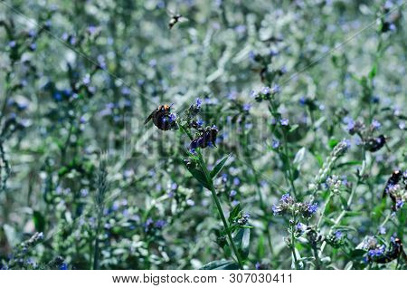 Butterflies And Insects Collect Sweet Nectar From Wild Wildflowers.