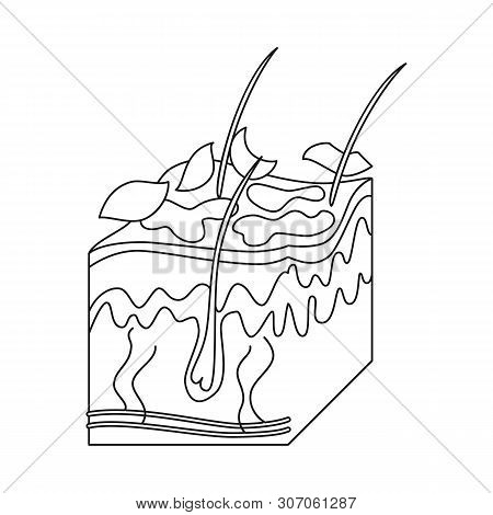 Isolated Object Of Skin And Epidermis Sign. Collection Of Skin And Tissue Stock Symbol For Web.