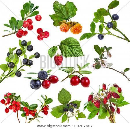 Collection of wild forest berries  isolated on white background