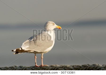 Seagull On The Watch