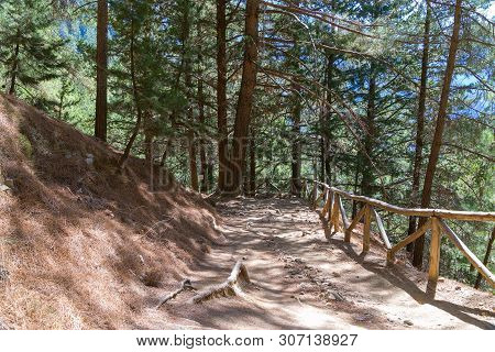 National Park Of Samaria, Grecce, Island Crete. Gorge Samaria. Forest Trail Among Old Tall Trees.