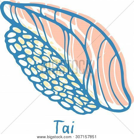Sushi Tai - Sketch Color Illustration. Nigiri With The Bream Fish And Rice. Japanese Seafood. Vector