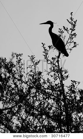 A Heron In A Tree