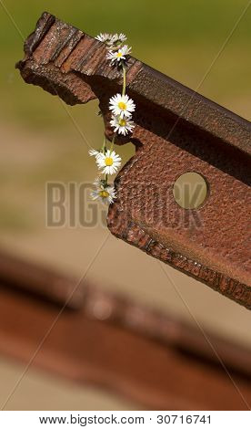 A Flower On The Track