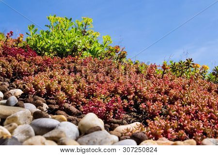 Clorful Green Living Extensive Sod Roof Detail Covered With Vegetation Mostly Tasteless Stonecrop, S