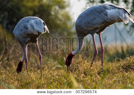 A Nature Painting And Beautiful Home Decor Scenery Which Is Pleasing To Eyes Created By Sarus Crane