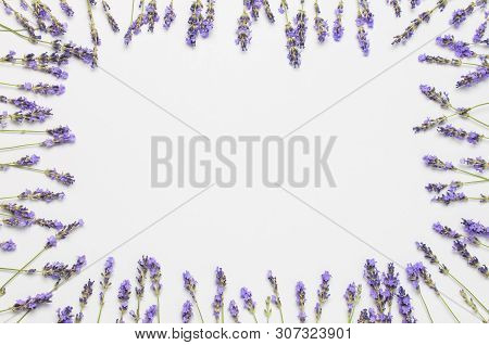 Flowers Composition. Frame Of Fresh Flowers Of Purple Lavender On Light Gray Background. Flat Lay To