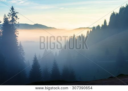 Glowing Cloud Above The Forested Valley At Sunrise. Thick Fog Among The Spruce Forest On Hills. Magi
