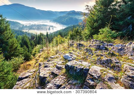 Thick Glowing Fog Among Spruce Forest Down In The Valley. Wonderful Nature Background. View From The