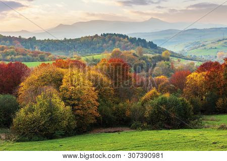 Beautiful Autumn Countryside In Mountain At Dusk. Trees In Colorful Foliage On The Edge Of A Rural F