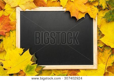 Clean Blackboard On The Autumn Leaves Background. Back To School Concept With Blackboard And Fallen
