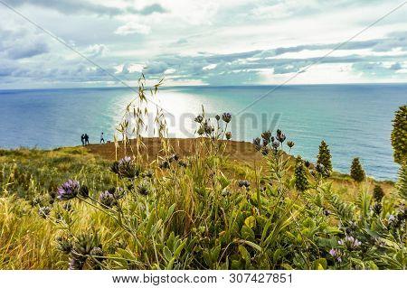 Beautiful Flowers And Plant At Sunset At Atlantic Coast On Madeira Island