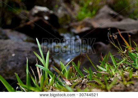 Green grass and water flowing background