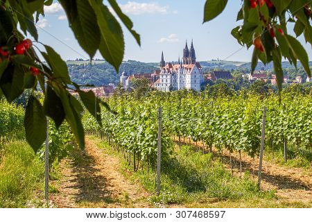 German Wine-growing Region In Saxony On The Southern Slope Of The Elbe With A Beautiful View Of The