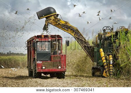 Mackay, Queensland, Australia - August 2012: A Mechanical Sugar Cane Harvester Loading The Cut Crop