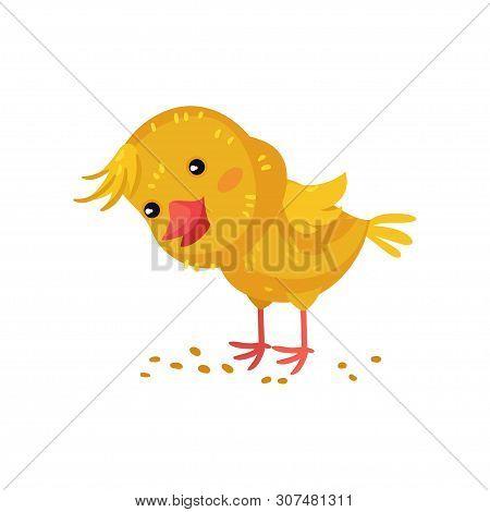 Little Yellow Cartoon Chicken Pecks Grain. Vector Illustration On White Background.
