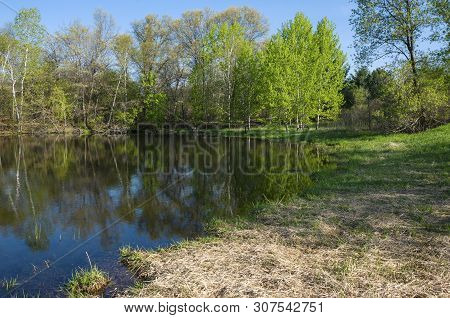 Along Pond Bank At Edge Of Forest In Salem Hills Park Inver Grove Heights Minnesota