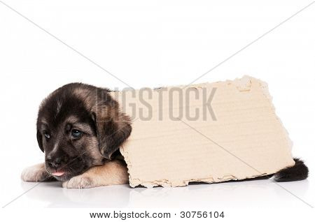 Cute puppy of 1,5 months old with a cardboard on a white background