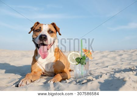 Cute Dog On The Beach And A Glass Of Cold Cocktail Drink. Summer Vacation, Time By The Seaside Conce