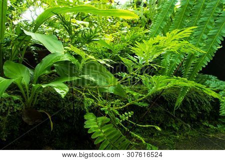 Freshness Fern Leaves With Moss And Algae In The Tropical Garden