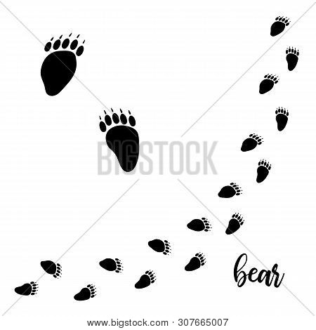 Bear Paw Vector Foot Trails. Footprints Of Wild Bear. Diagonal Tracks For T-shirts, Backgrounds,