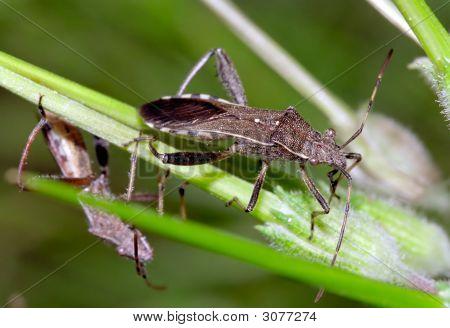 Bug Feeding