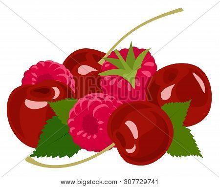 Berries. Raspberry And Cherry On White. Vector Illustration